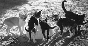 cuxkatzen
