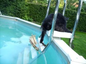 santi-pool