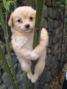 kletternder-hund