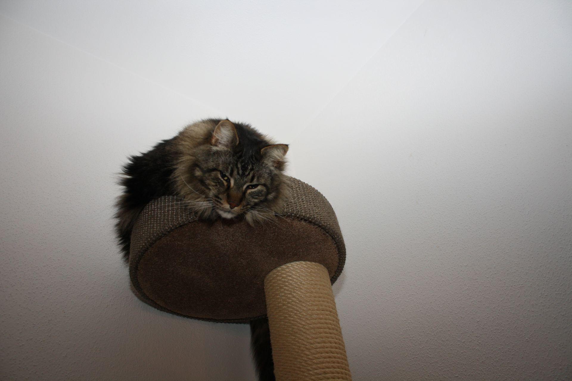 wer nimmt meine katze